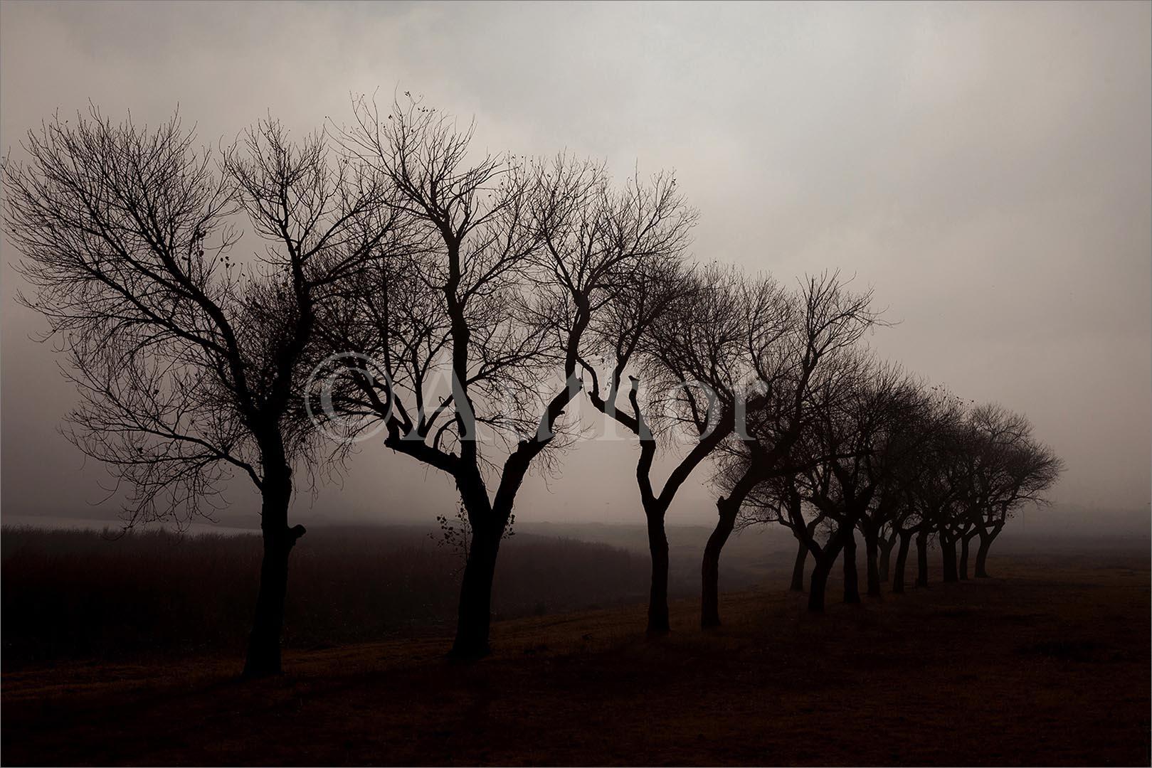 3_NA_its a misty morning_Kenneth Kubheka