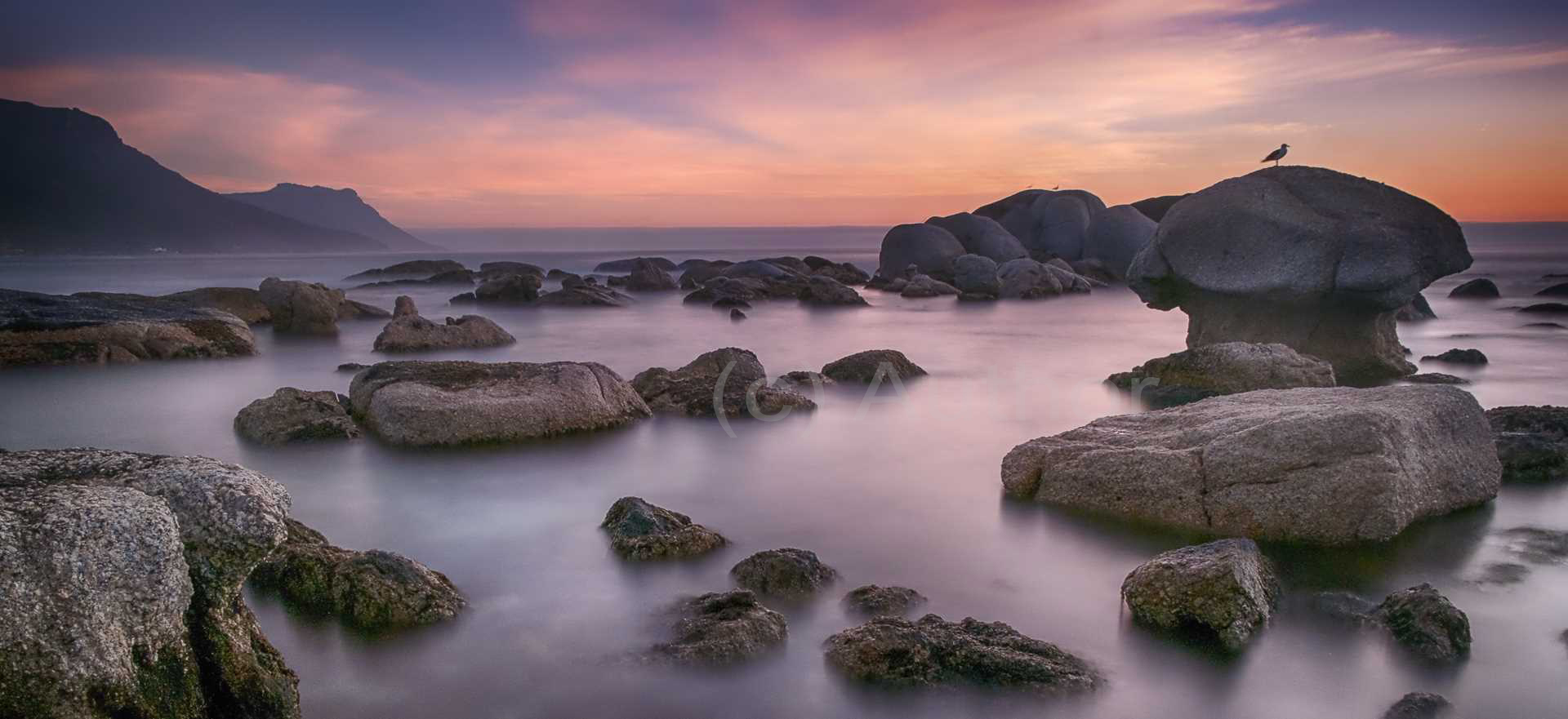 4_NA_Seagull Silhouette_Clare Appleyard