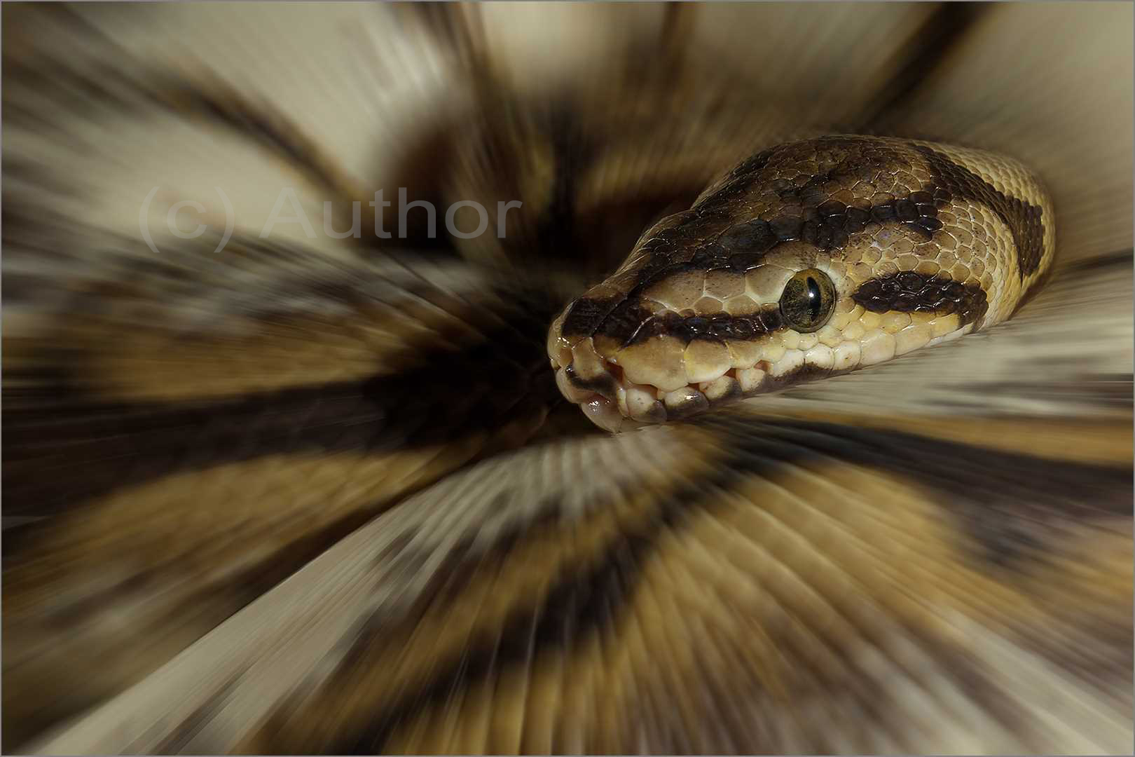 5_pi_Snake in Abstract_Natasha Bird