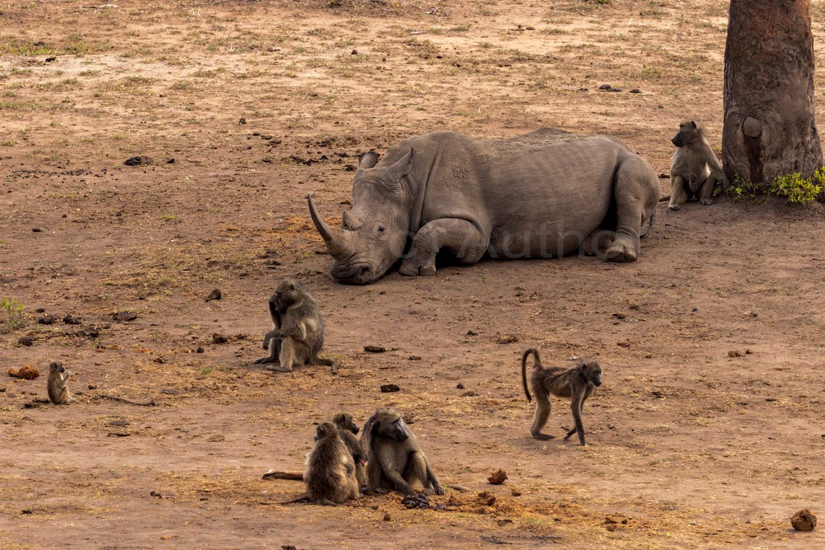 2_na_Rhino defence_Tony Wilson