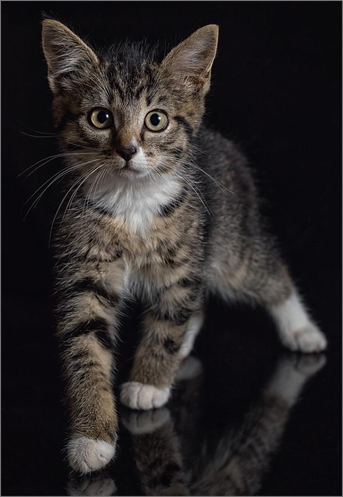 3_ap_Hey kitty kitty_Natasha Bird