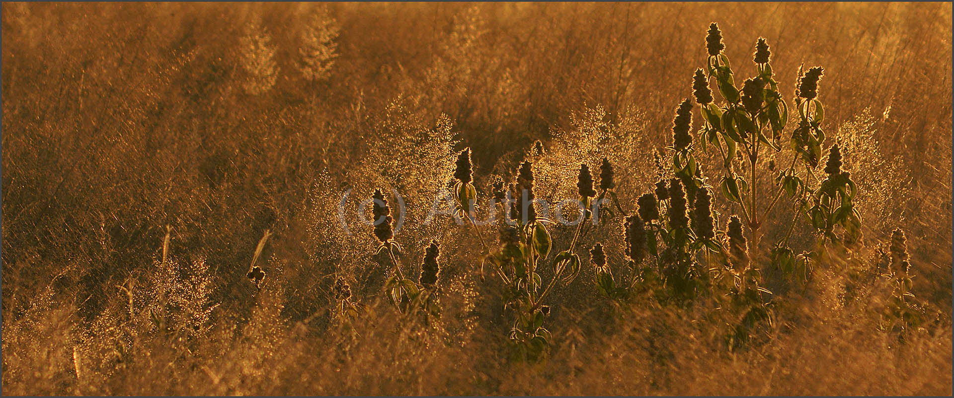 5_NA_grass tapesry_John Coumbias