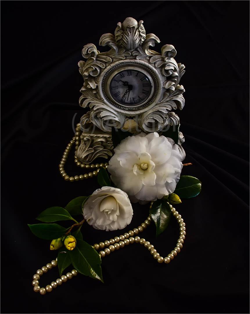 3_PI_Timeless Camellia_Brian Kleinwort