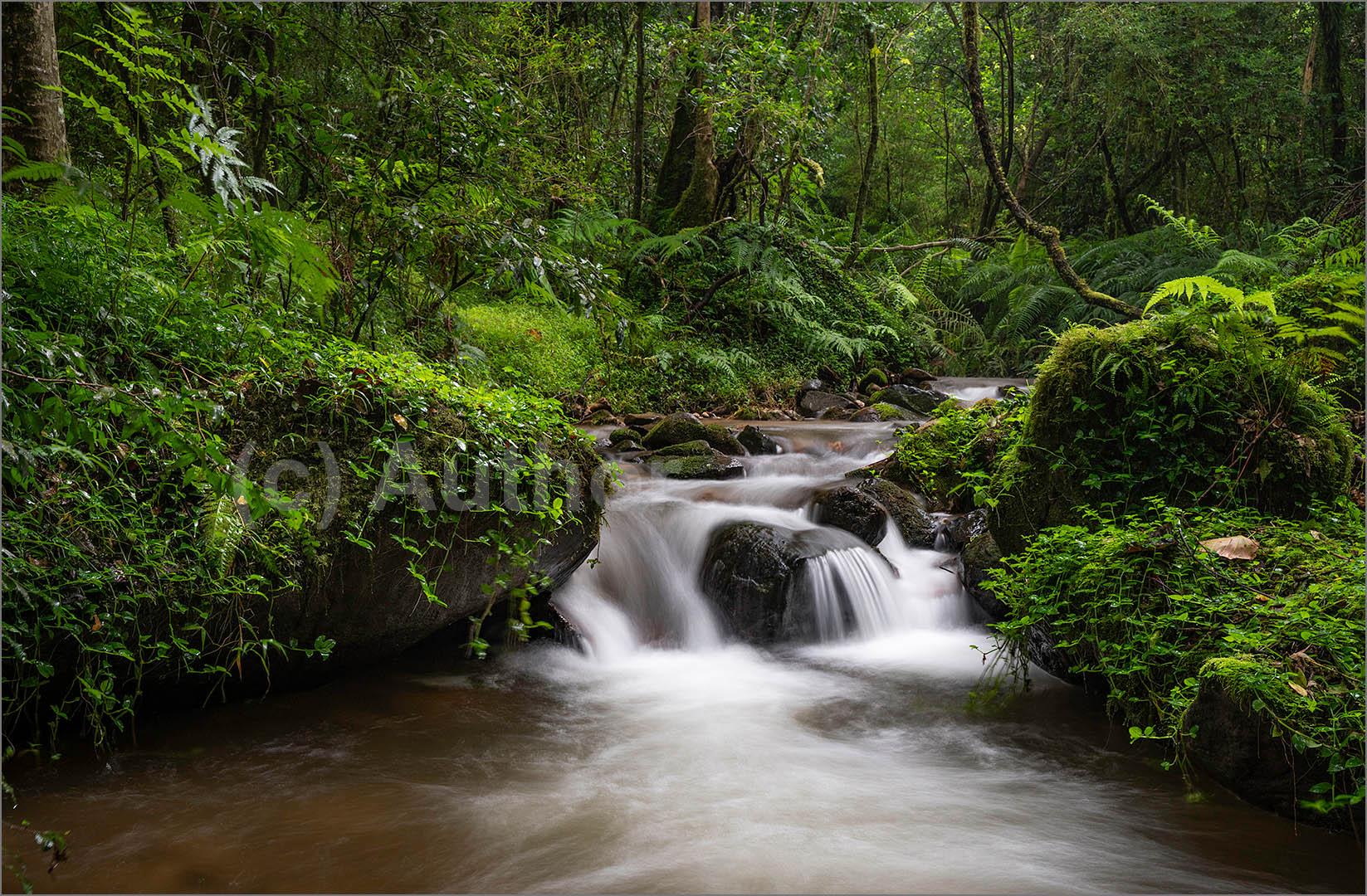 2_NA_Enchanted Forest_Linda Carter
