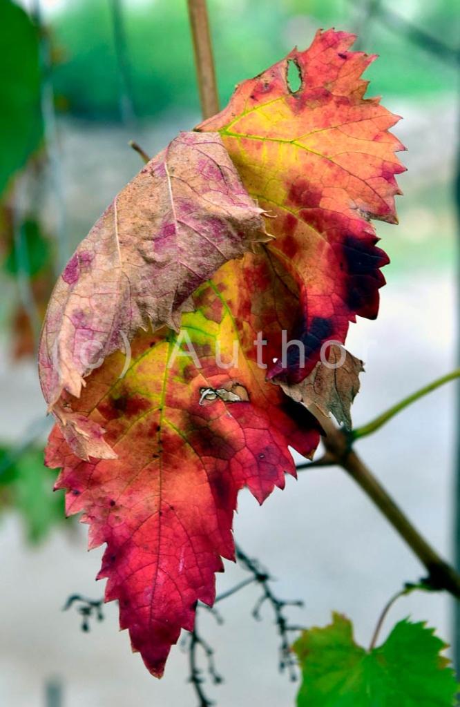 4_NA_Kaleidoscope of colours_Christa Smith