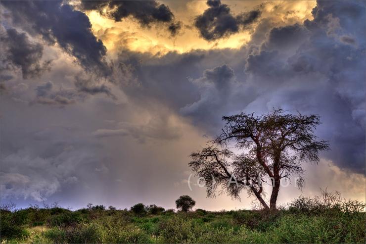 6_SS_Lone tree faces oncoming storm_Natasha Bird