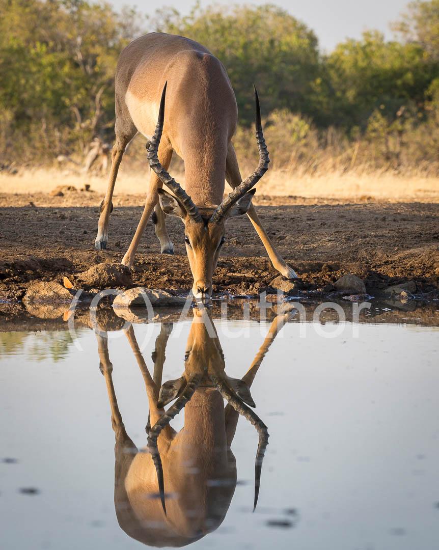 1_NA_Reflections_Hitesh Daya