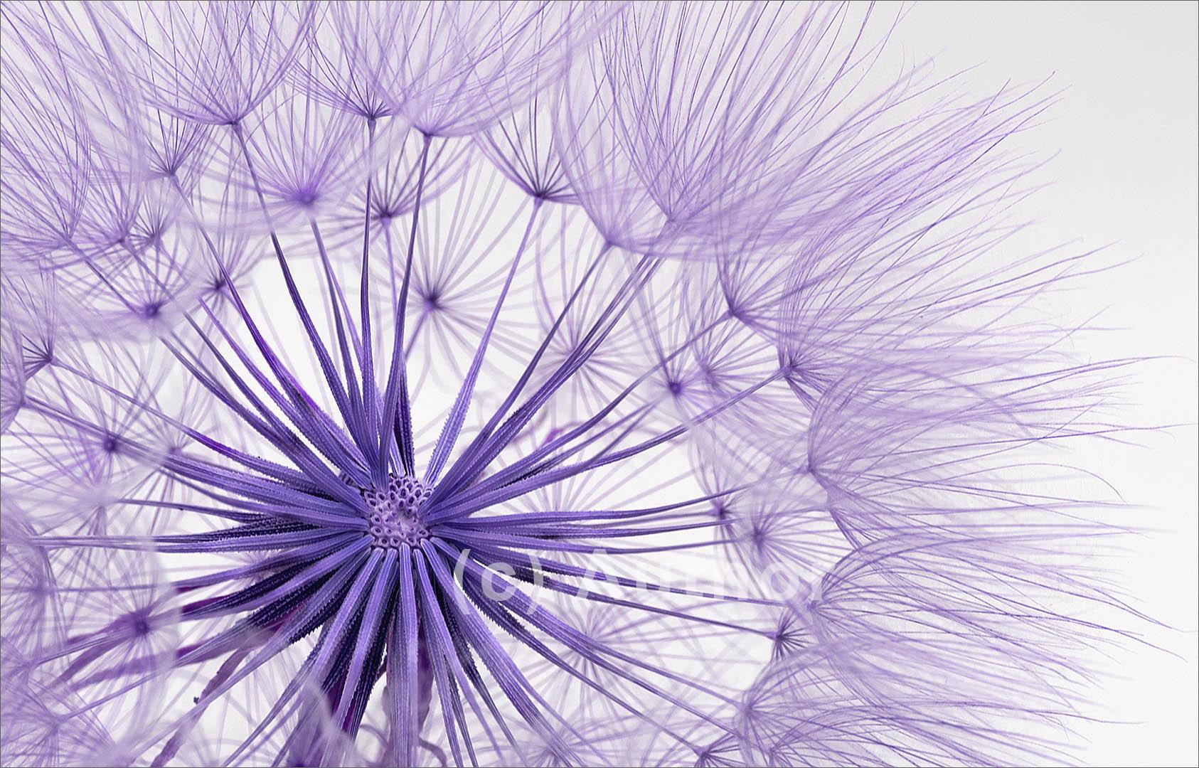 6_SS_Purple wishes_Natasha Bird