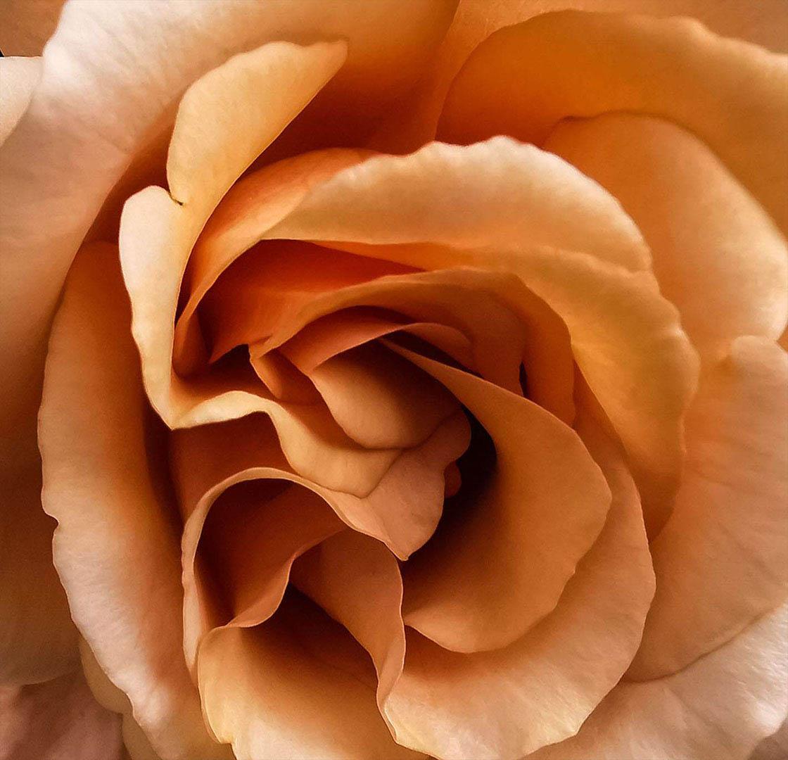 3_CP_Rose maze_Caryn Wilson