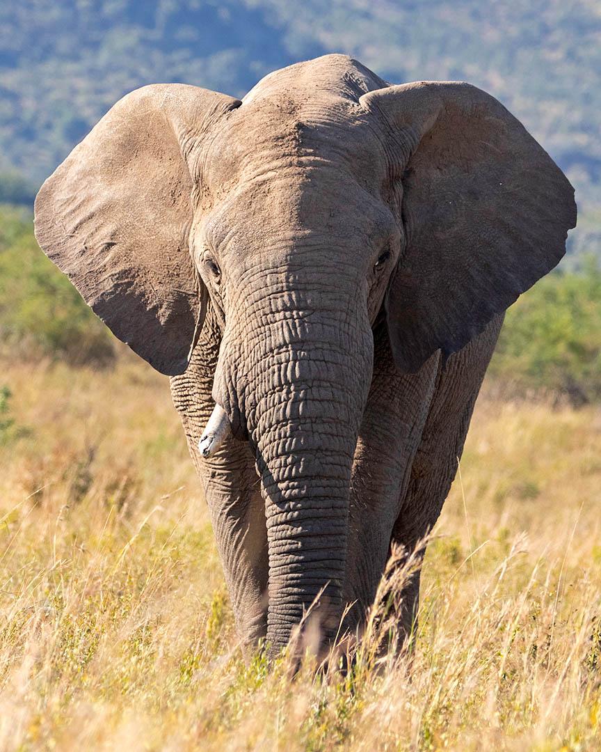 3_NA_Dramatic Elephant_Andrew Mayes
