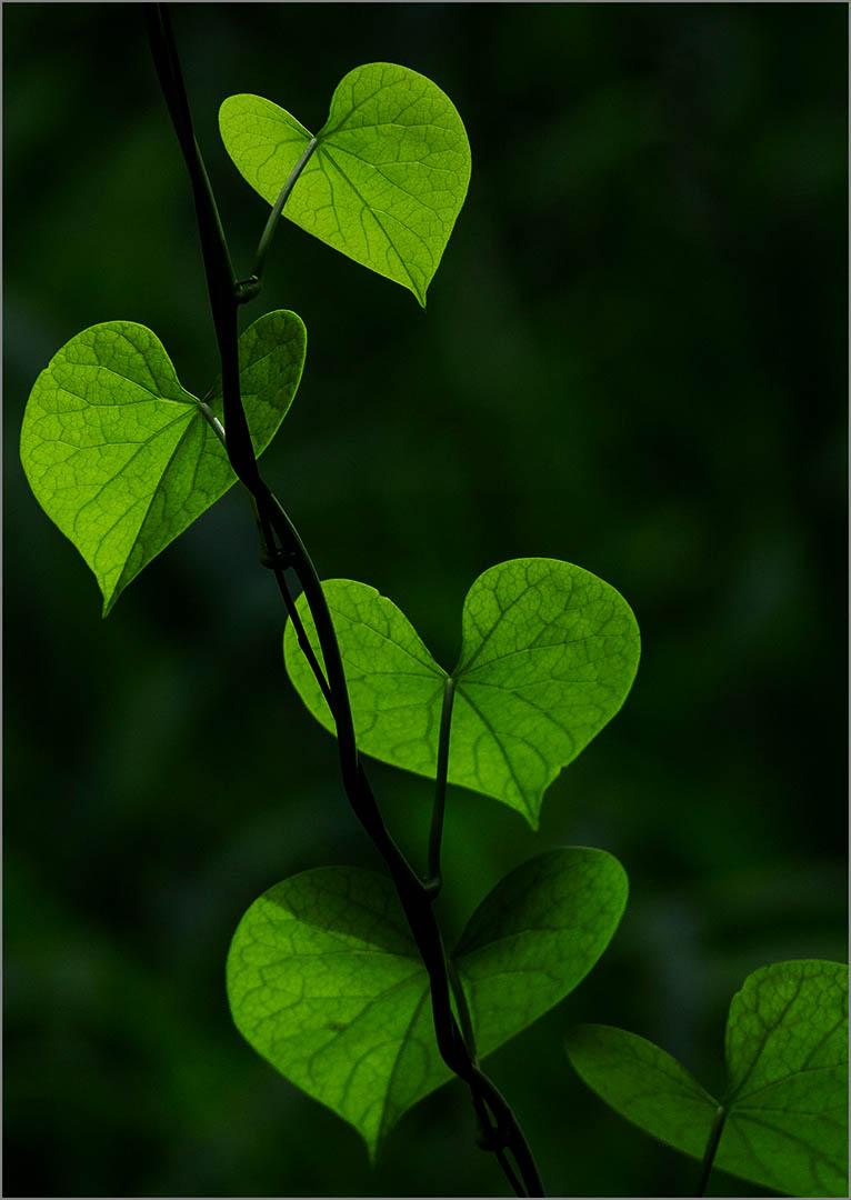 6_SS_Green_Vadivelu TT