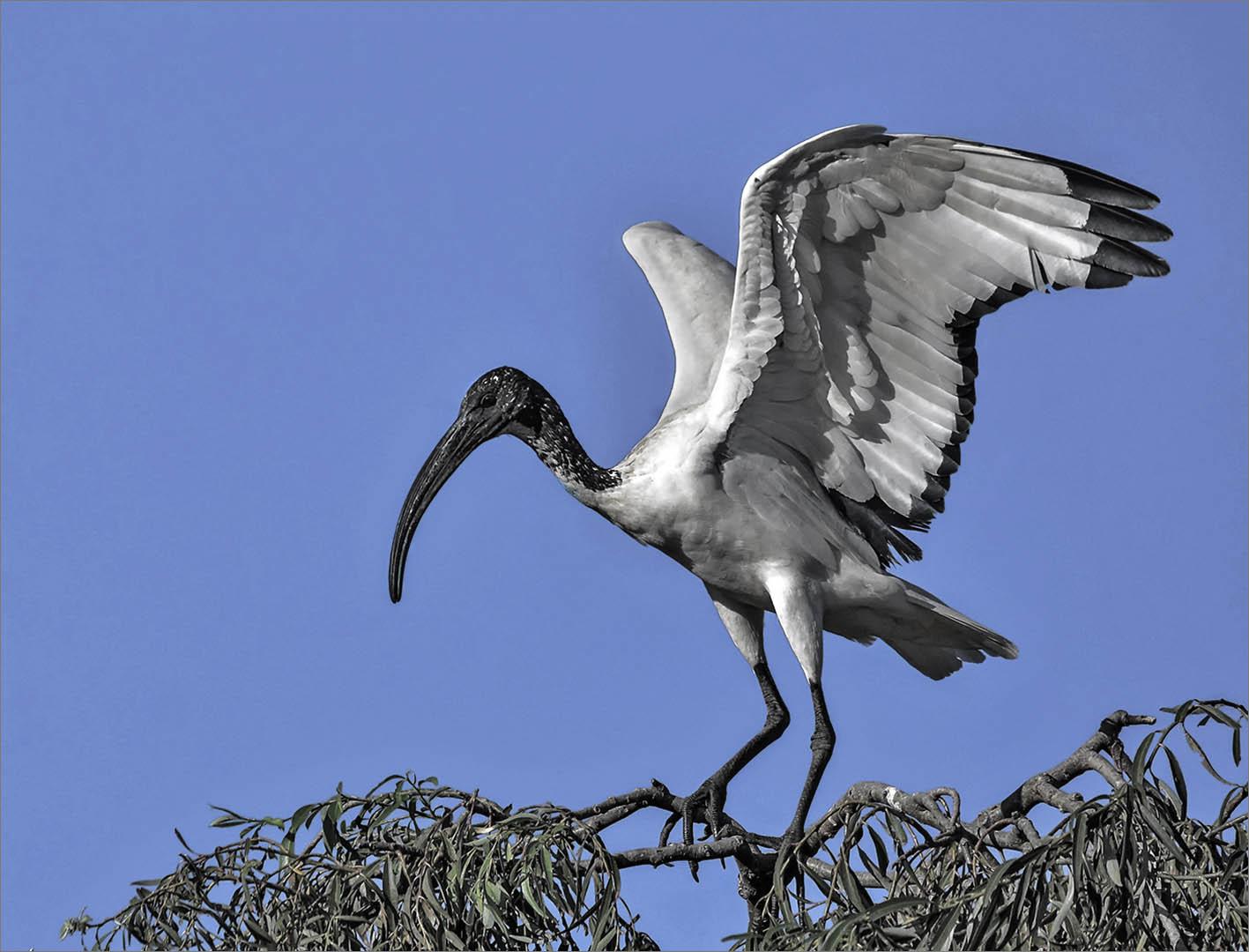4_NA_Stretching my wings_Brian Kleinwort